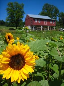 Charlestown Farm