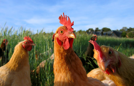FACT's Healthy & Humane Farm Funds - Call for Applications!