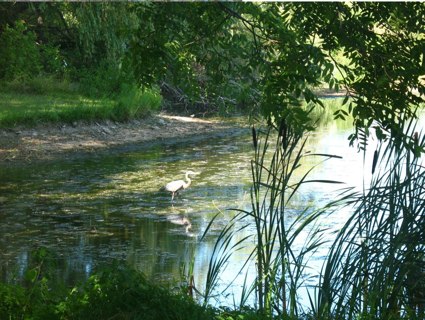 Hartwood Farm - pond