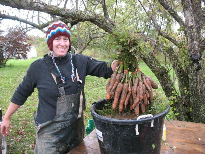 Hartwood - carrot harvest