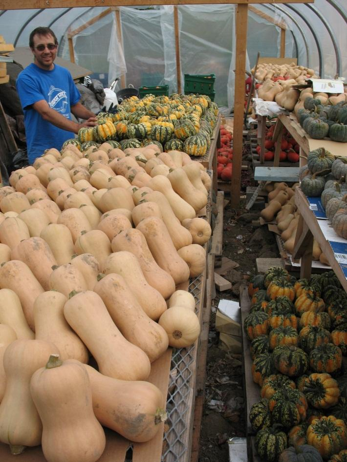 Hartwood - drying winter squash