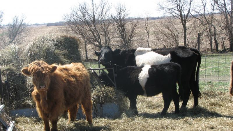 Johnson Hill farm 1