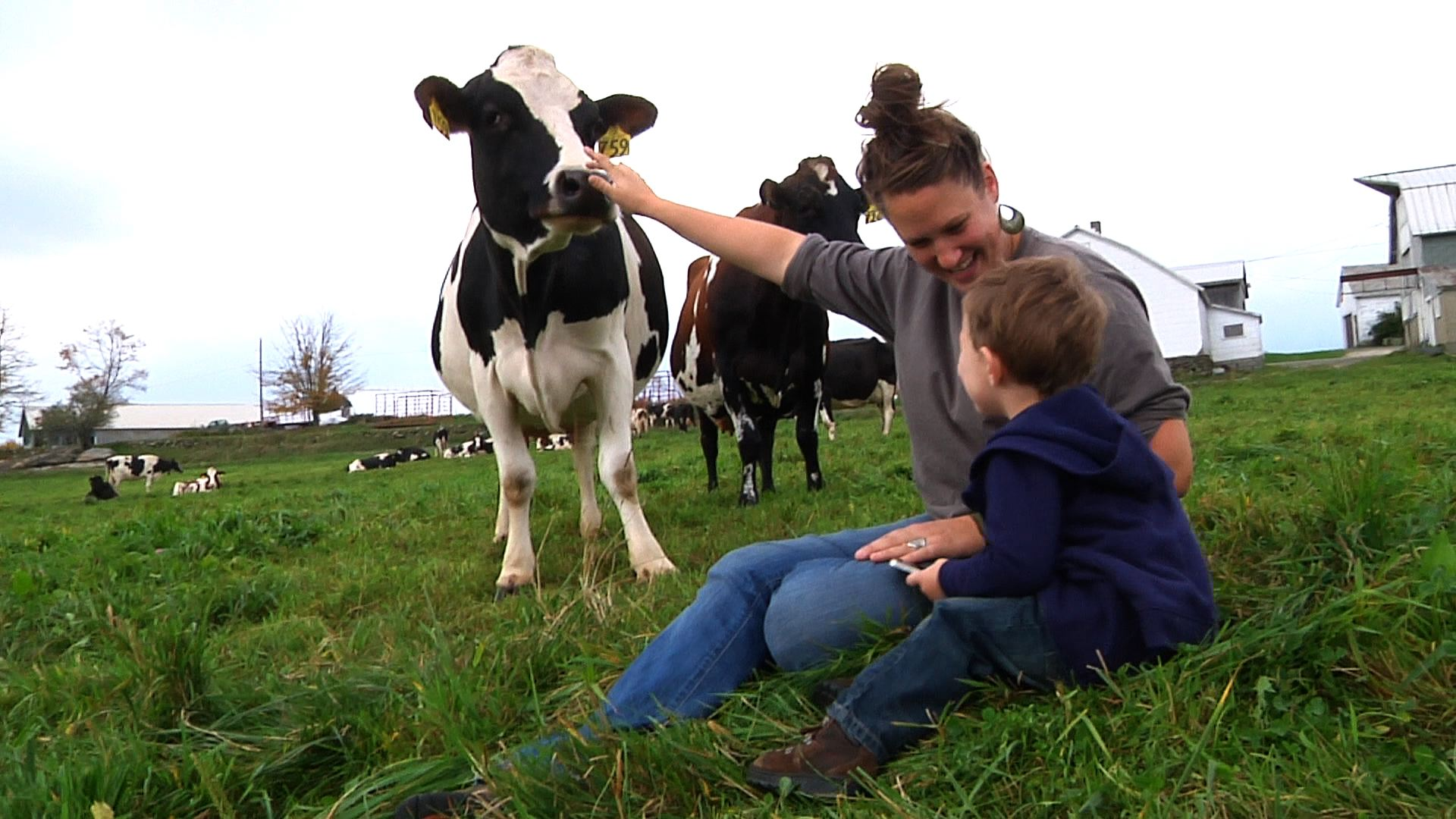 Corse Family Farm - Saying hello to the cows