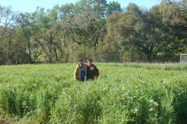 Let's Go Farm, Santa Rosa, CA
