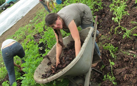 Mulching potatoes at Persephone Farm Crop Mob, photo courtesy of Jacqueline Cramer