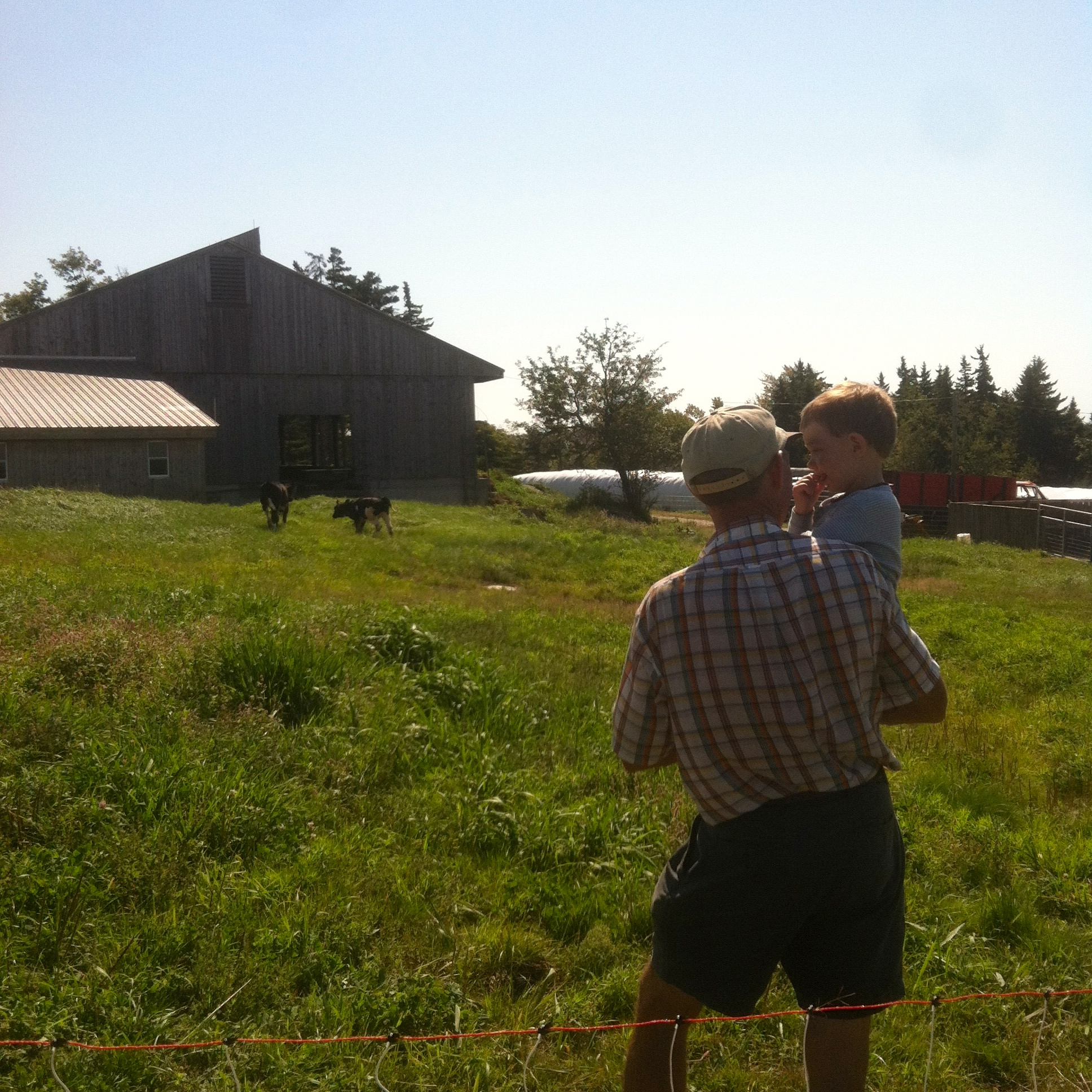 Corse Family Farm - some help inspecting the field