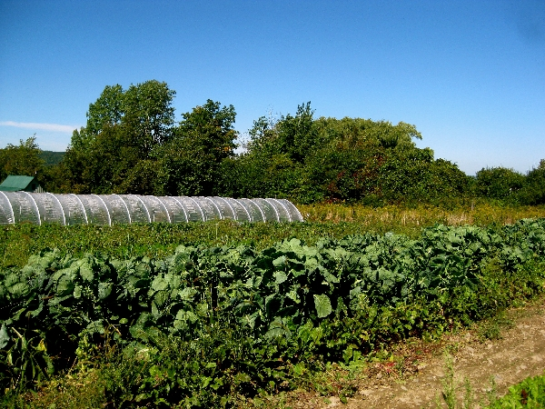 Plowbreak farm - hoophouse