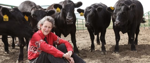 An interview with Temple Grandin on the Future of Small Farms