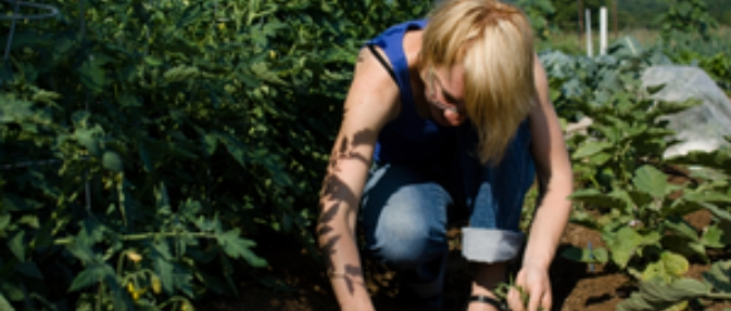 Farm Commons Law Webinar Coming Up - Developing a Good Buyer Relationship