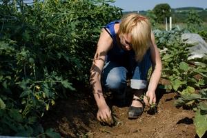 Farm Commons  - weeding farm employee