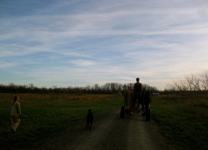 Good Life Farm - working with horses 2