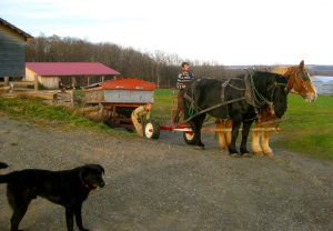 Good Life Farm - working with horses