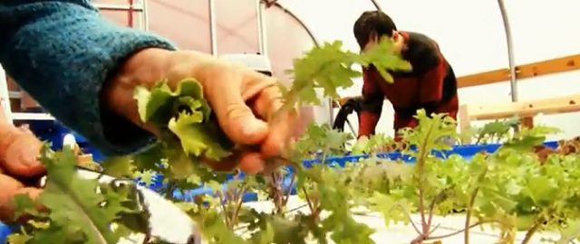 Green Bridge Growers: Growing Good Food and Good Jobs