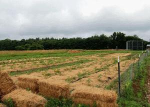 Fresh Start - straw on fields