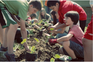 Schoolyard Farms - transplanting