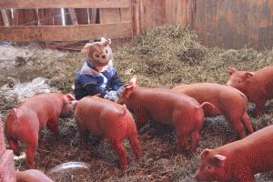 Fork Right Farm - pic 3