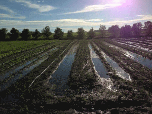 Forager Farm - equipment - water in fields