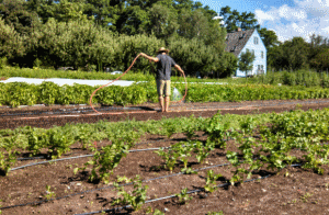 Second Wind CSA watering