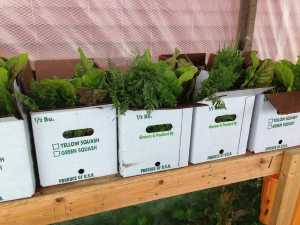 Forager Farm - training - box of greens
