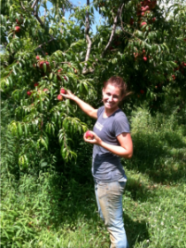 Robsons Farm - picking peaches