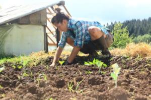 Planting at Rogue Farm Corps