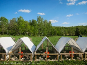 Farm Marketing Solutions - chicken tractors