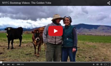 NYFC Bootstrap Golden Yoke image