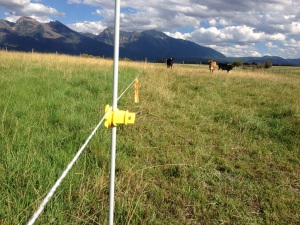 The Golden Yoke - Fenceline Difference - small
