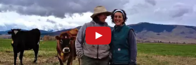 Bootstrap Dairy Farmer Video Release!