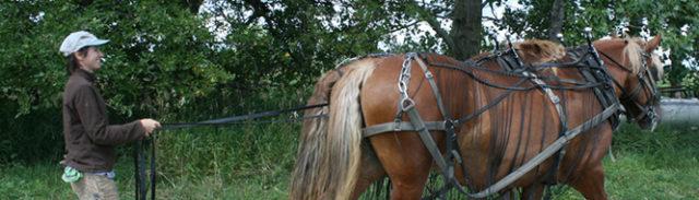 Bootstrap at Furrow Horse Farm - Meet Caitlin