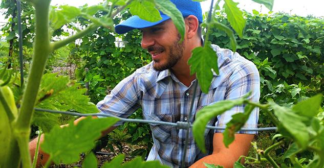 Emaldi_tomatoes_crop