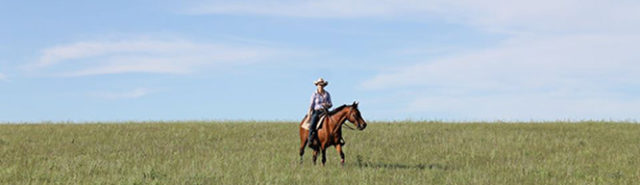 I wanted to be a cowgirl - Bootstrap at Willow Springs Farm
