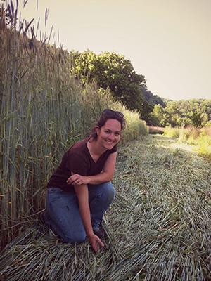 Maggie_Roller crimped rye_crop