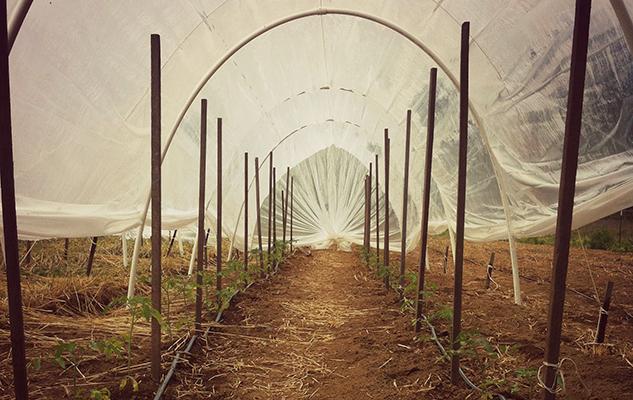 caterpillar tunnel_crop