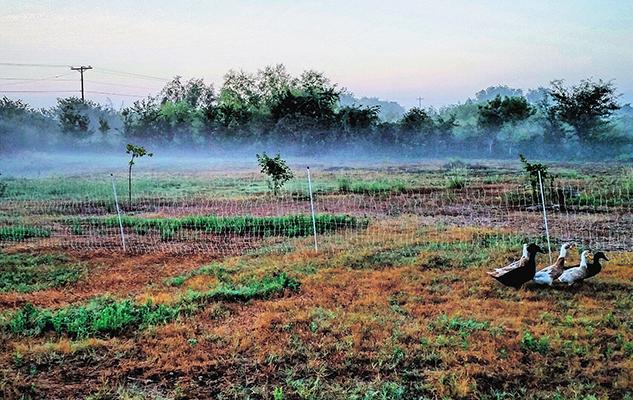2015-09-23 10.36.39_crop