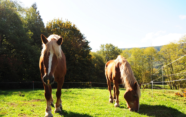 Horses Lady and Abby_crop