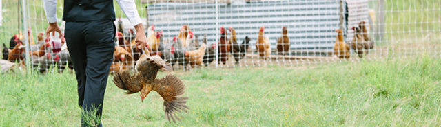 Weddings and chickens: A farm business plan – Bootstrap at Emadi Acres Farm