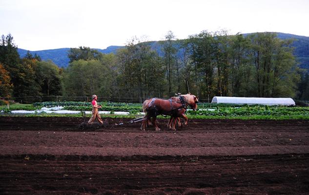 new horses in field_crop