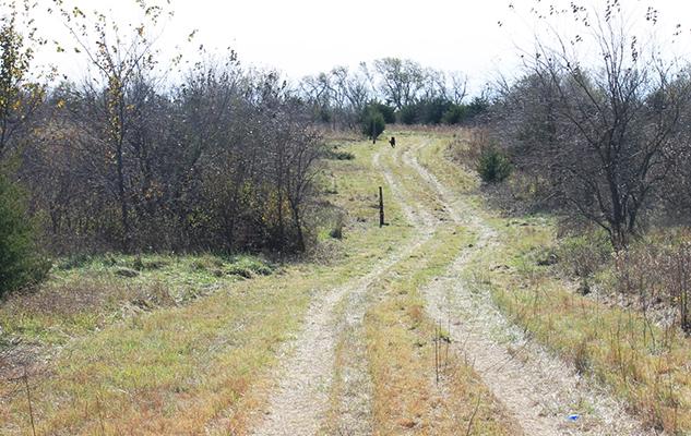 path-uncleared farm_crop