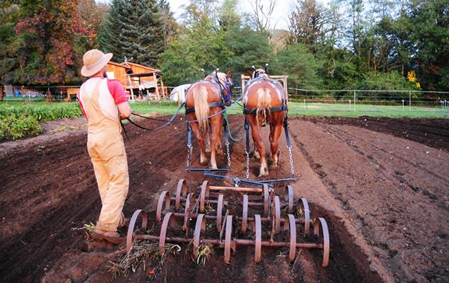 brandon_drivinghorses_crop