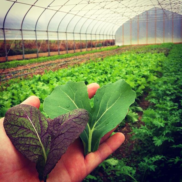 vegetable farming business plan
