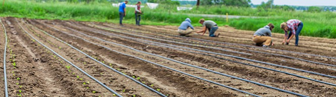 Kropp_Kacey hand planting_header