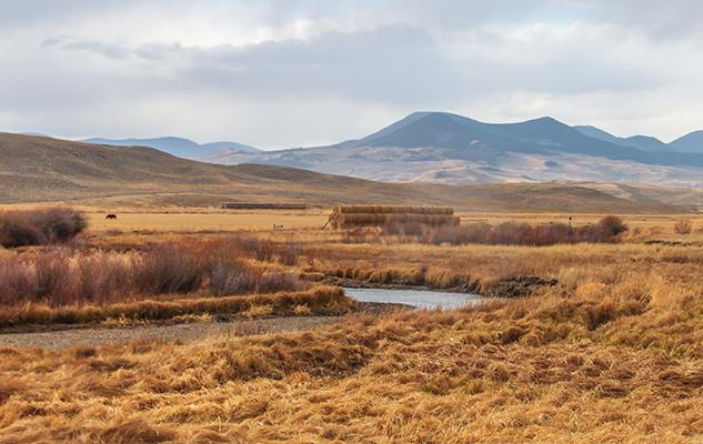 Kropp_Kacey pasture scape_croped