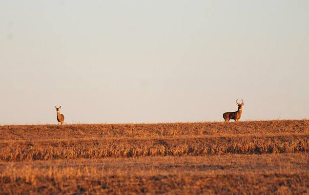 WillorSprings_deer_crop