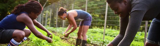 Cilantro Harvest_header