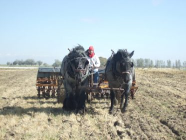 Blue-Sage-Farm-seeding-with-Jaak-and-Liza-small