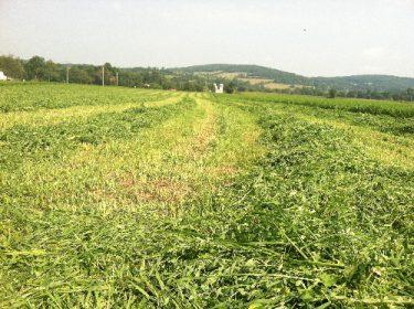 Chaseholm-Farm-mowed-grass-small
