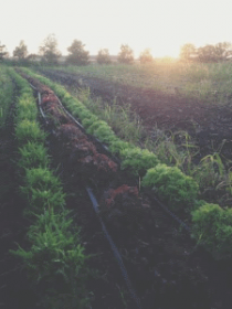 Forager-Farm-equipment-lettuce