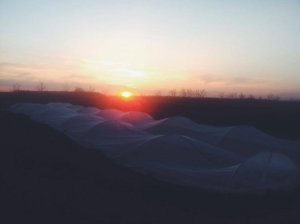 Forager-Farm-row-cover-sunset