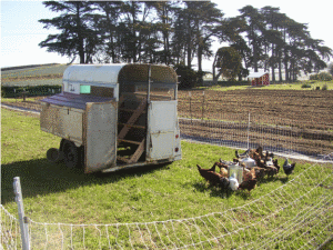 Lemonade-Springs-chicken-tractor